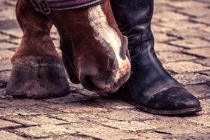 Воняет обувь, что делать